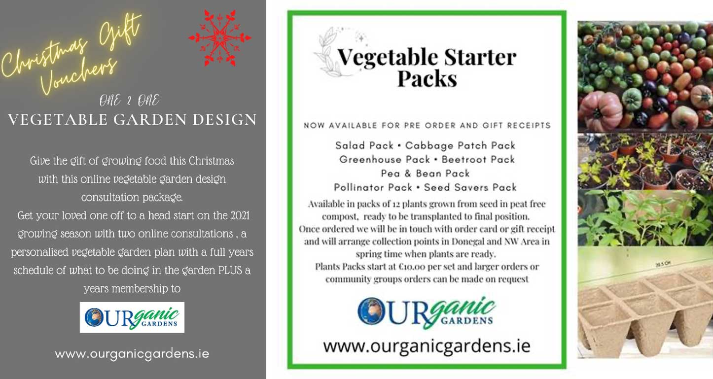 Donegal-Food-Coast-OURganic One to One Vegetable Garden Design
